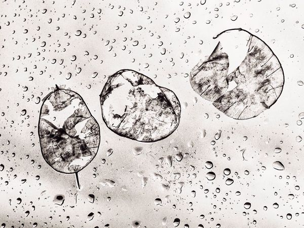 Cellules en crise IPhone Minimalism Monochrome Waterdrops Blackandwhite Iphonography