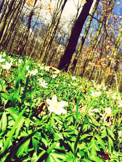Flowers Wood Art Relaxing Spaziergang