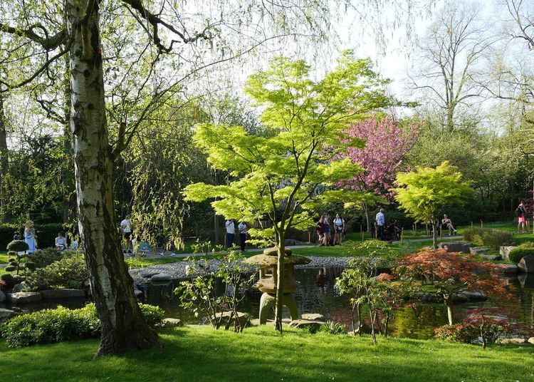 Holland park springtime Holland Park Japanese Garden Holland Park Kensington Holland Park Kyoto Garden Holland Park London Holland Park Springtime Beauty In Nature Day Grass Green Color Growth Nature Outdoors Park Park - Man Made Space Plant Tranquility Tree