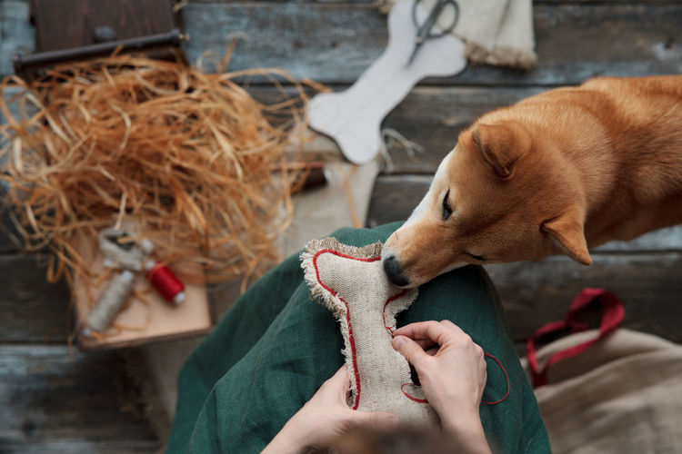 Midsections of woman making diy dog toys from textile and eco filler. pets care concept