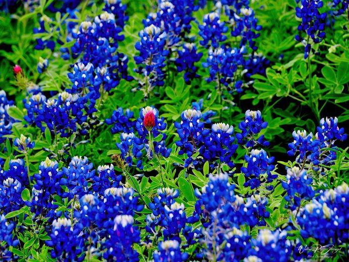 Full frame shot of purple flowering plants in park