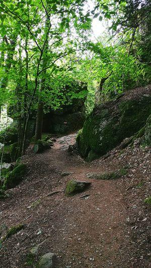 Stones Wood Woodwalking