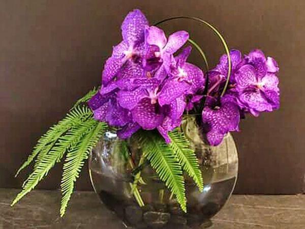 Flower Collection FlowerLove 🌸 Orhids