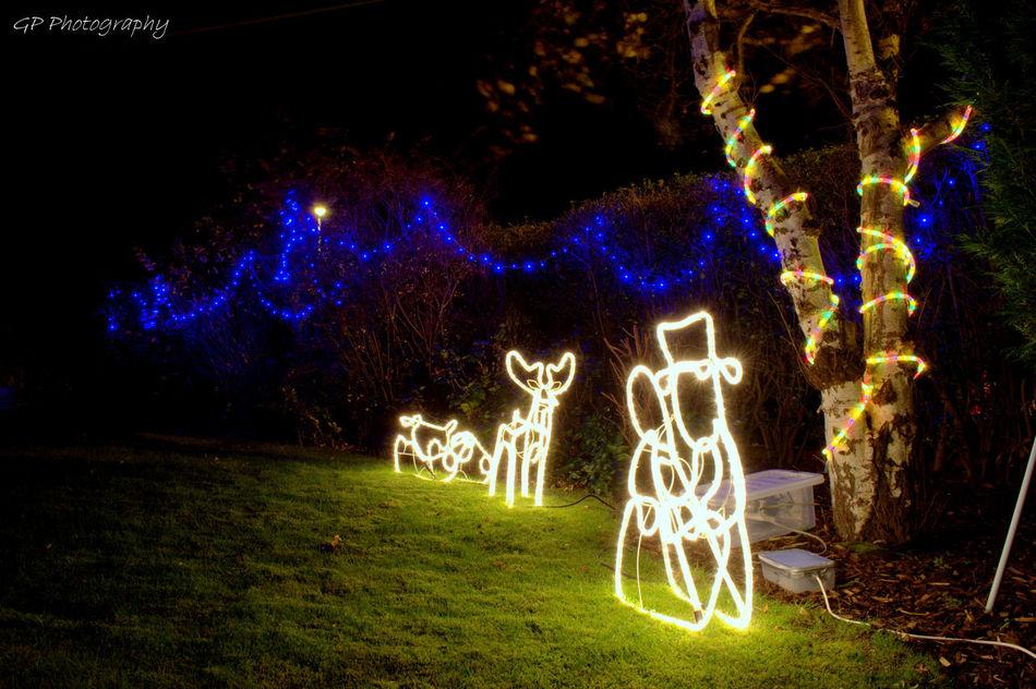Showcase: December Christmas Lights Christmas Garden