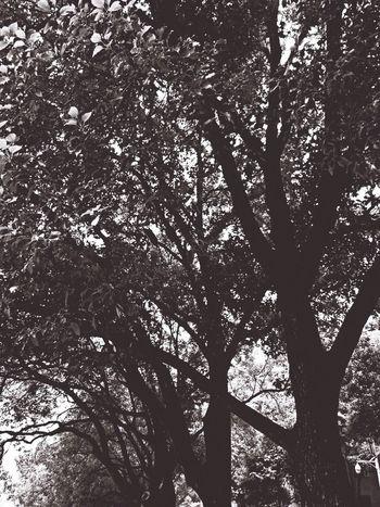 Hugging A Tree Enjoying Life Hello World