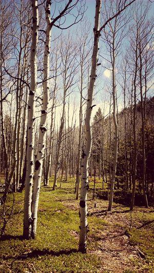 aspens at golden gate canyon park, co Taking Photos Enjoying Life Walking Around Colorado