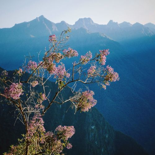 High angle view of flowering tree against mountains