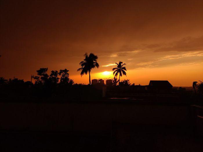 Silhouette palm trees against orange sky