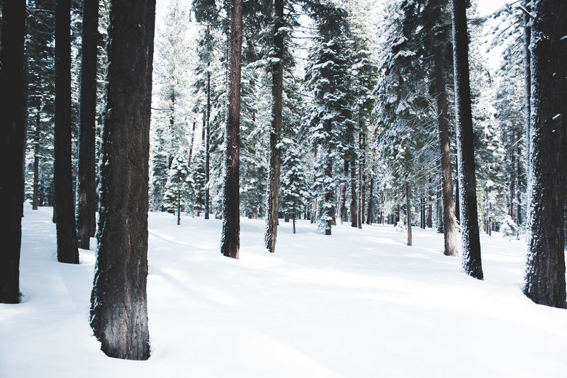 Snow Covered Trees In Forest