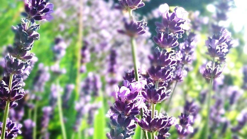 Flowers Brütten Sony Xperia Z3 Picoftheday