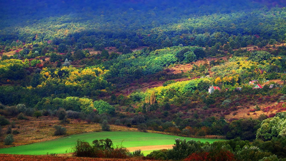 Autumn colors, scattered with suny spots Autumn Autumn Beauty In Nature Brown Colorful Day Fall Foliage Forest Grass Green Color Growth Landscape Lush Foliage Nature No People Outdoors Pilis Pilisszántó Plant Rural Scene Scenics Tranquil Scene Tranquility Tree