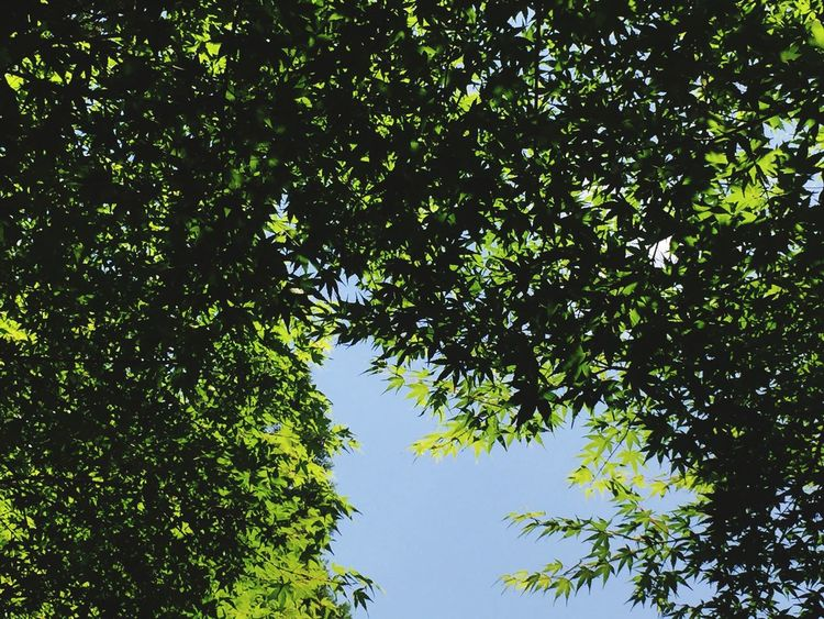 Tree Day Nature Outdoors Green Color Clear Sky Sky Branch injapan