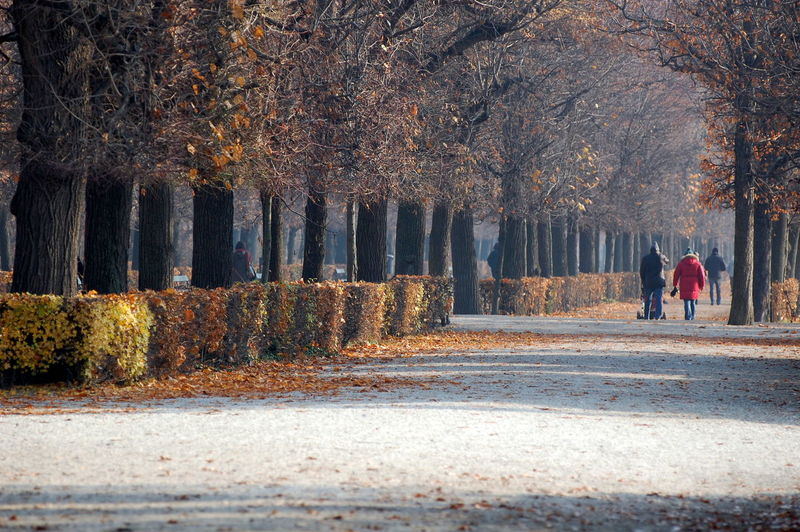 Men Walking On Road Amidst Trees During Autumn