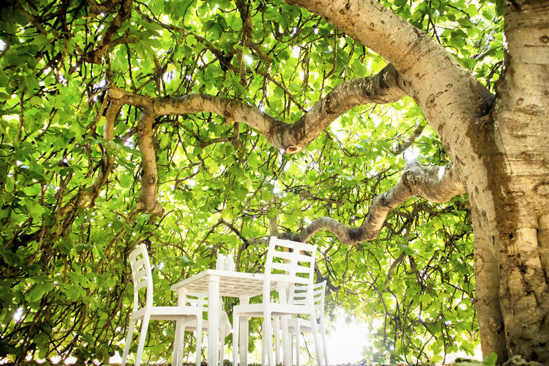 Tree Plant Tree Trunk Trunk Low Angle View Growth Nature Branch No People Architecture Day Plant Part Built Structure Leaf Outdoors Building Exterior Sunlight Green Color Beauty In Nature Land