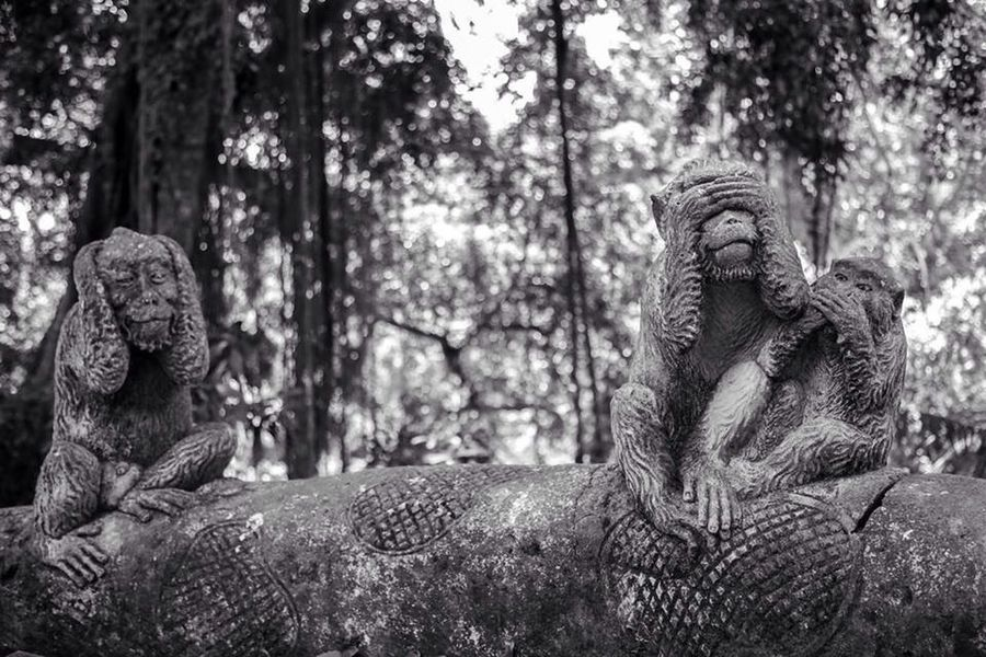 The Five Senses Blackandwhite Traveling Statue Bali Monkey