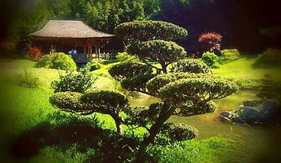 Taking Photos Zen Colours Of The Orient Hello World Parco EyeNatureLover France Getting Inspired