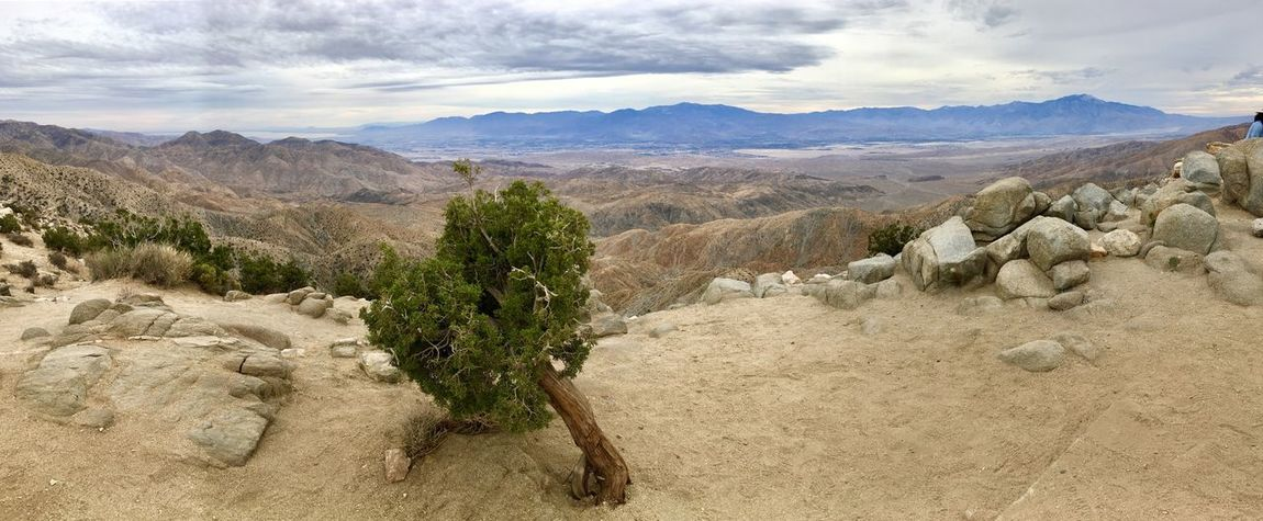 Mojave Desert View Mojave National Preserve Mojave Desert Mojave Desert California Travel Arid Climate Mountain Desert Tranquil Scene No People Outdoors Day Mountain Range Physical Geography Sky Travel Destinations Tree