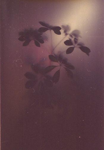 Plant (film scan) Film Photography Film Plant Still Life Painting Dark Soft Light Dim Light Filmisnotdead Leaves Leaf Night