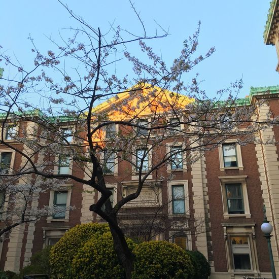 Spring is here! Spring Columbia University