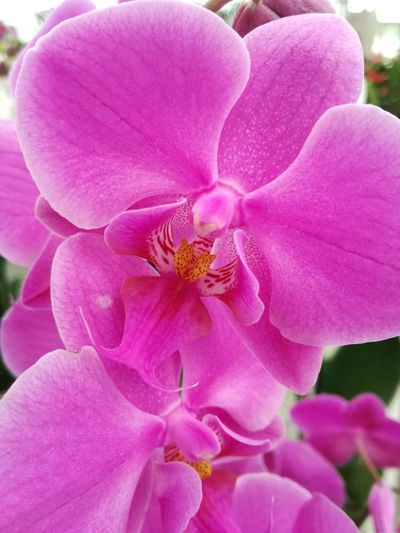 Flower Pink Color Petal Flower Head Nature Beauty In Nature Fragility Orchid No People Close-up Outdoors Freshness Day