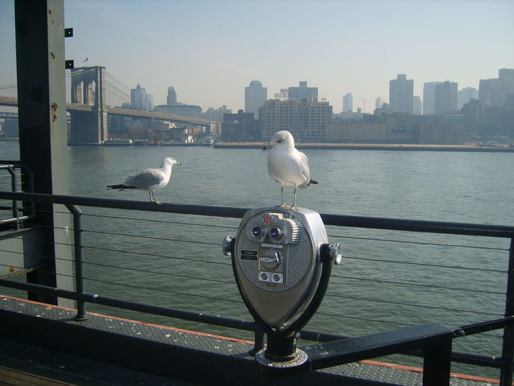 New York Bird Photography New York City South Street Seaport