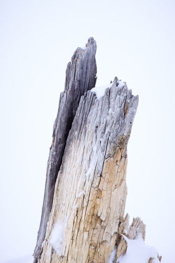 Weathered stump in Yellowstone EyeEm Selects Low Angle View Sky Clear Sky Nature No People Day Tranquility Beauty In Nature Copy Space Winter Outdoors Snow Tranquil Scene Cold Temperature Tree Textured