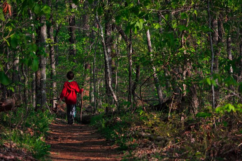 Rear view of child walking in forest