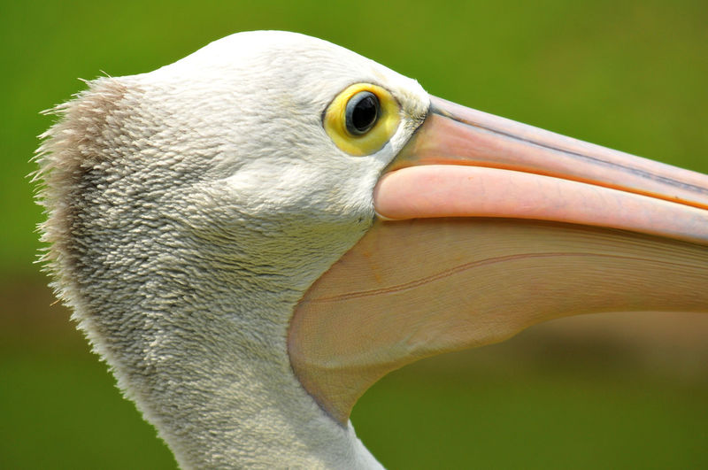 Head of a crane