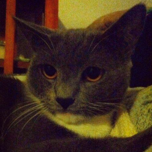 引きこもりモードのイーヨー君猫 私の猫って素晴らしい  大したもんだ