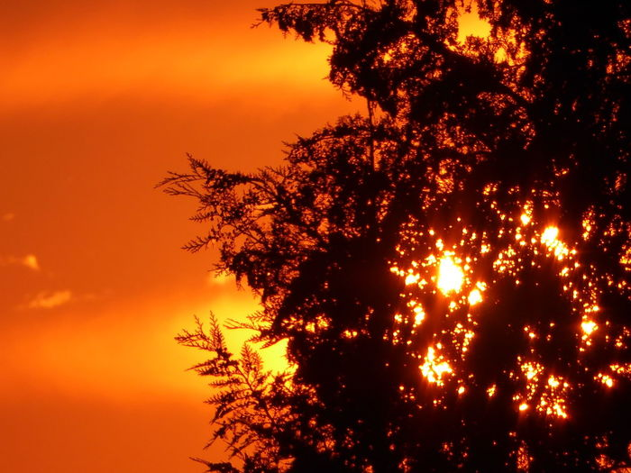 Sundown behind a tree Sunset Orange Color Silhouette Nature Beauty In Nature Fireball Summertime🌼🍃🌺🌷☘️🌿😍✨ Enjoying The View For My Friends 😍😘🎁 You Raise Me Up✨ My Soul's Language Is📷 Lucky Me🦄 For The Love To Life Bright Light Tranquil Scene Sundown...♥ View From Home Power In Nature Silhouette
