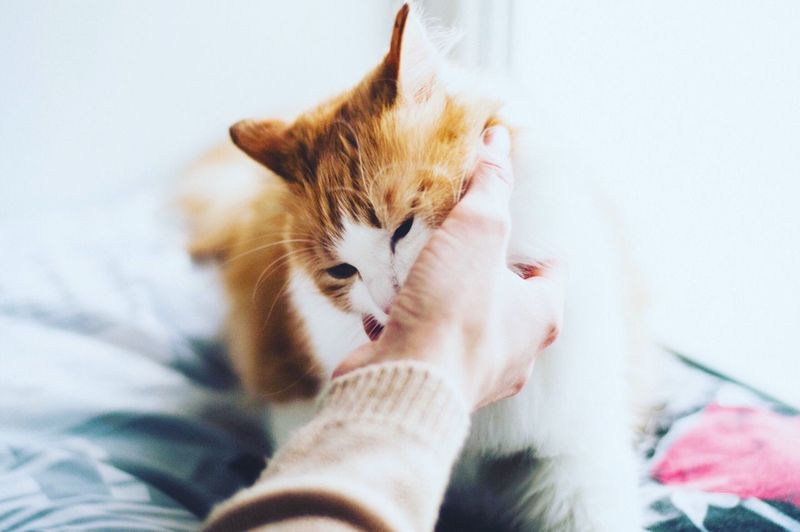 Cats Pets Photography Home Warm