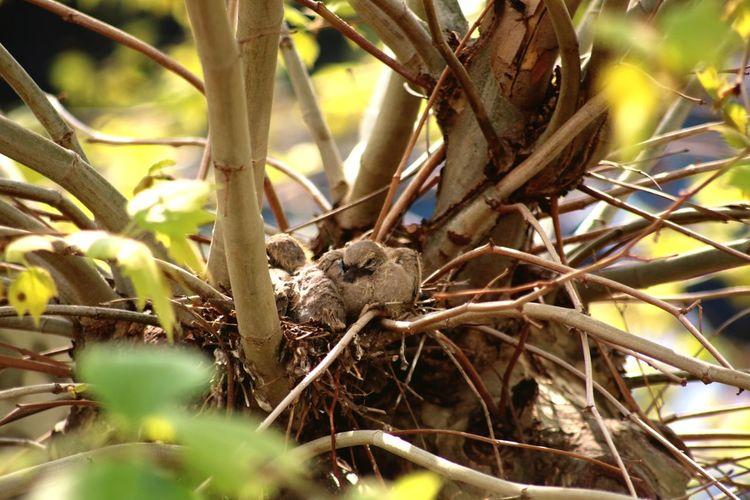 babies ! Bird
