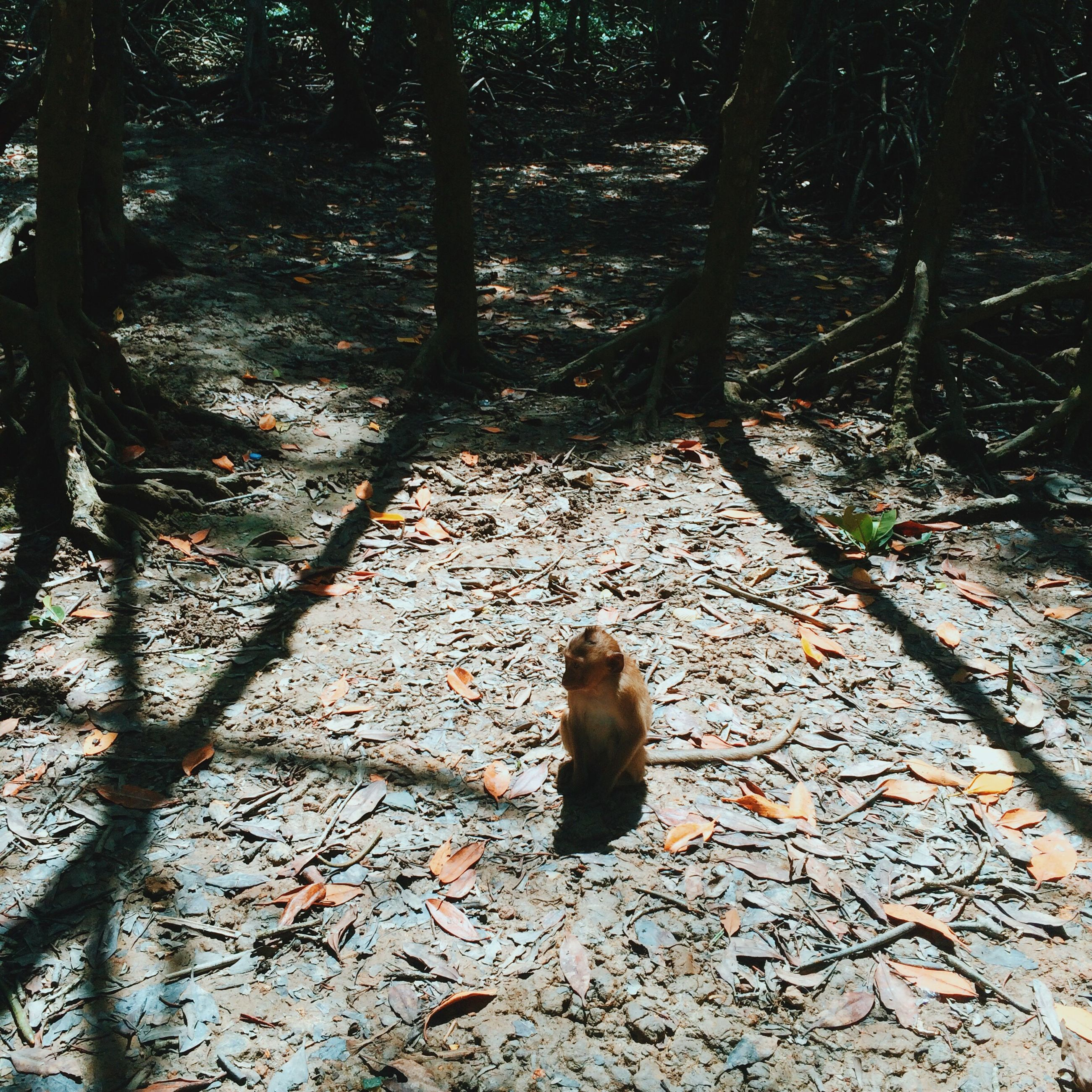 one animal, animal themes, mammal, domestic animals, pets, tree trunk, tree, forest, season, looking at camera, nature, field, domestic cat, tranquil scene, tranquility, outdoors, day, woodland, zoology, footpath