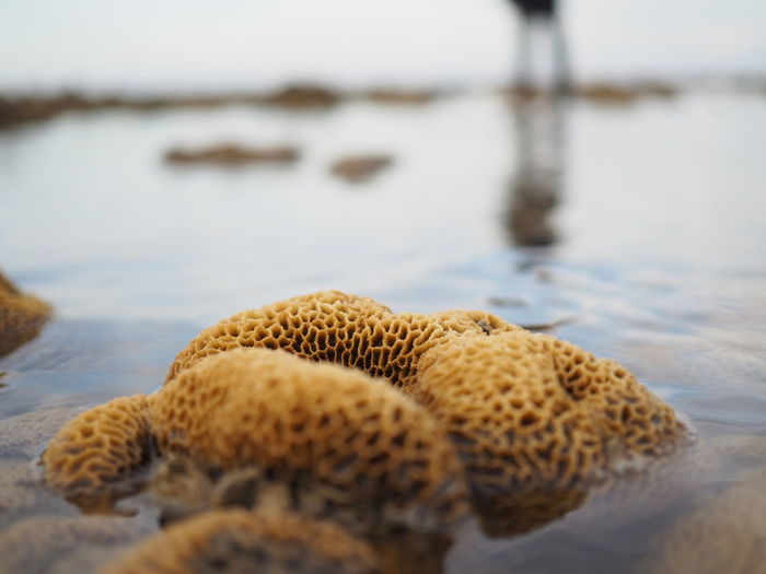 Close-up of coral reef at beach
