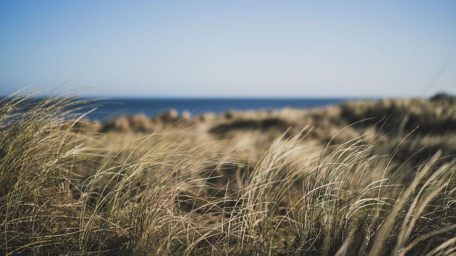a beautiful baltic morning Baltic Baltic Sea Landscape_Collection Nature Nature Photography Ostsee Ostseeküste WeissenhäuserStrand Coast Landscape Landscape_photography Nature_collection Reed Weißenhäuser Strand