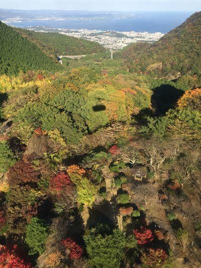 ロープウェイ 大分 日本 秋 山 海 影 景色 紅葉 鶴見岳 Nature Tranquil Scene Beauty In Nature Growth No People Mountain Scenics Outdoors Landscape High Angle View Field Forest Sky