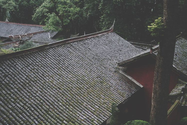 Tree Built Structure Architecture Roof No People Beauty In Nature
