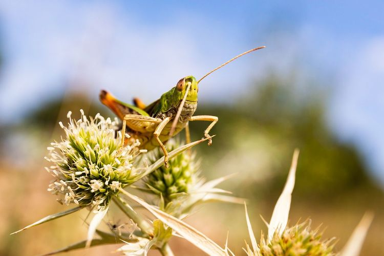 Perching Insect Flower Summer Close-up Animal Themes Sky Plant Grasshopper Magnification Mosquito Invertebrate Animal Antenna Wildflower Butterfly - Insect EyeEmNewHere