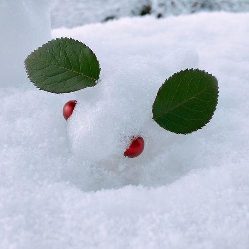 Snow Rabbit Rabbit Snow Handmade January 2018