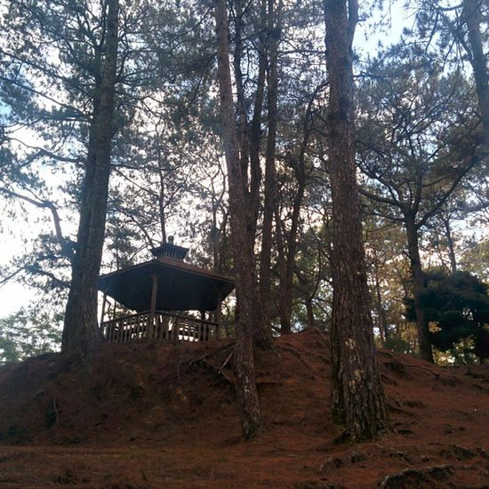 Pma Baguiocity Unfiltered Nexus5photography Nature Photography Trees Pavilion Pinetrees