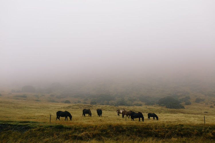 African Elephant Animal Themes Animal Wildlife Animals In The Wild Beauty In Nature Day Fog Grass Grazing Landscape Mammal Nature No People Outdoors Scenics Sky