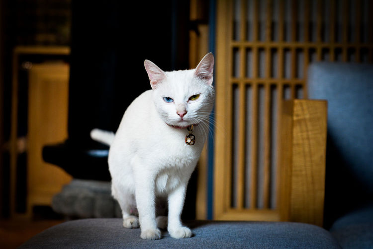 Cat Cat Eyes Indoors  No People Pets Small Cat Special Color Cat Two Colors Eyes