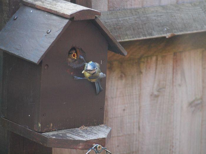 Bird in house
