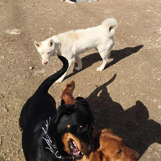 Nicephoto Popular Photos Dog Love Dog Friendship Nice Atmosphere Better Together ı Love My Dogs Playing With The Animals