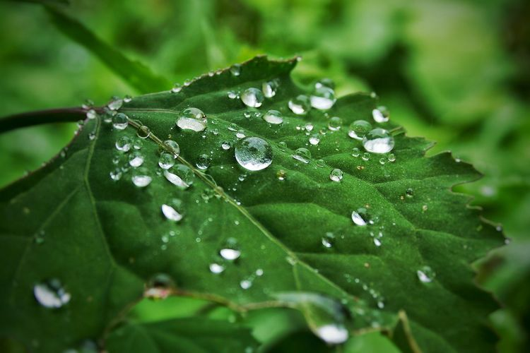 Close-Up Of Water Drops On Leaf