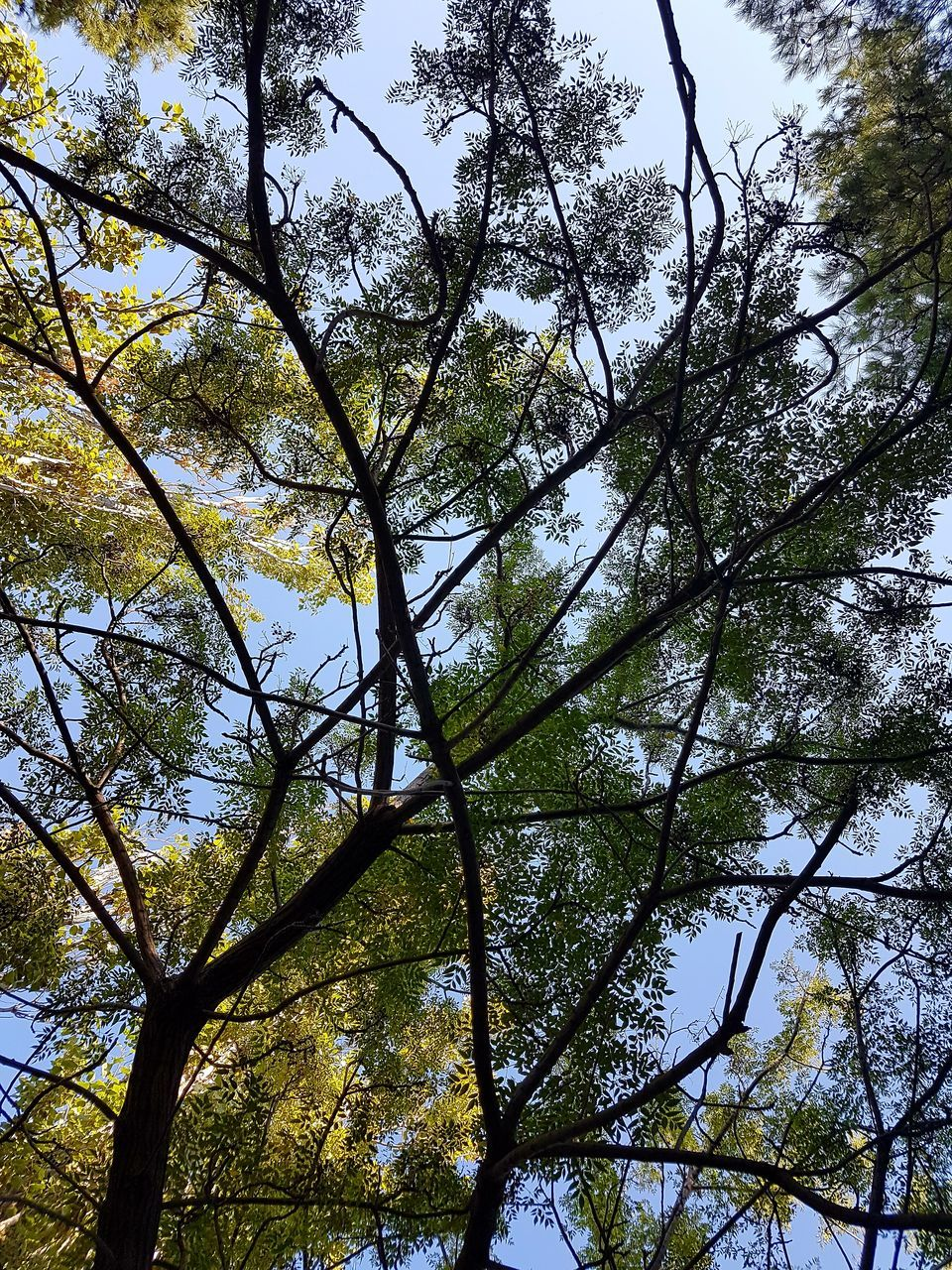 tree, low angle view, nature, beauty in nature, growth, branch, day, tranquility, forest, outdoors, no people, scenics, tranquil scene, sky