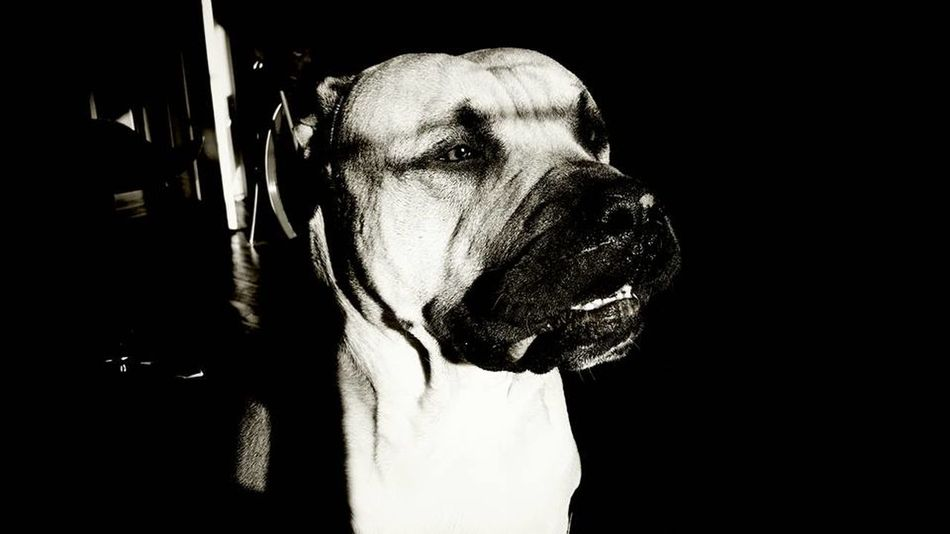 Cinema Paris EyeEmNewHere Dog Portrait Dogslife Dog❤ Dog The Portraitist - 2018 EyeEm Awards The Street Photographer - 2018 EyeEm Awards Face à Face Monochrome monochrome photography Fuckyousystem Expo EyeEm Best Shots - Black + White Exposition Monde Black Background Men Human Face Studio Shot Close-up Chiaroscuro  Pensive Pretty Asian  Single Drapes  Urban Scenery Attractive Glasses Depression Plain Background Head And Shoulders Caucasian Film Noir Style Thoughtful Thinking Tensed Clown Introspection One Mid Adult Man Only Horror Disappointment
