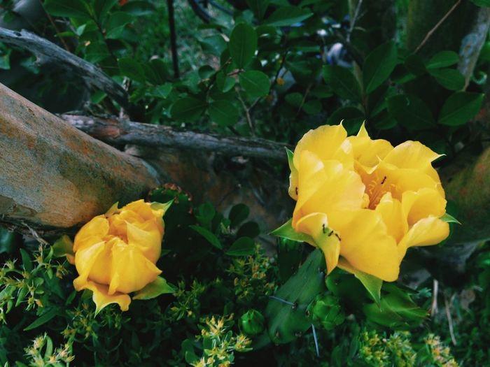 #flower#flowerporn #iphoneonly