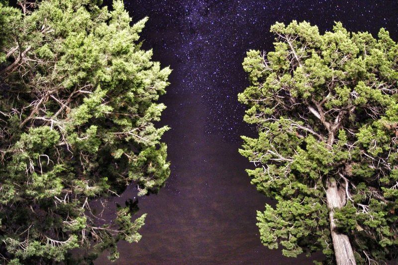 Low angle view of trees against star field in sky at night