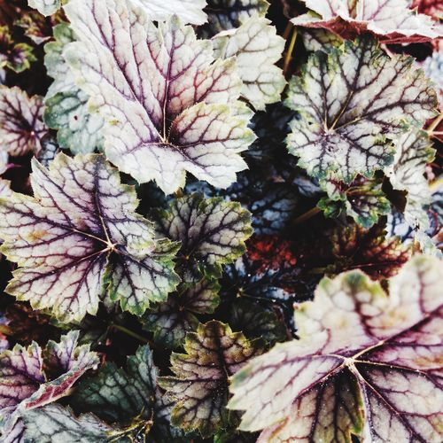 Nature Leaf Growth Fragility Day Outdoors No People Beauty In Nature Close-up Plant Freshness Flower Flower Head Veins Leaves Textures And Surfaces Blood The Great Outdoors - 2017 EyeEm Awards